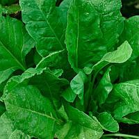 Семена шпината Гигант