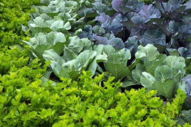 уплотненная посадка растений