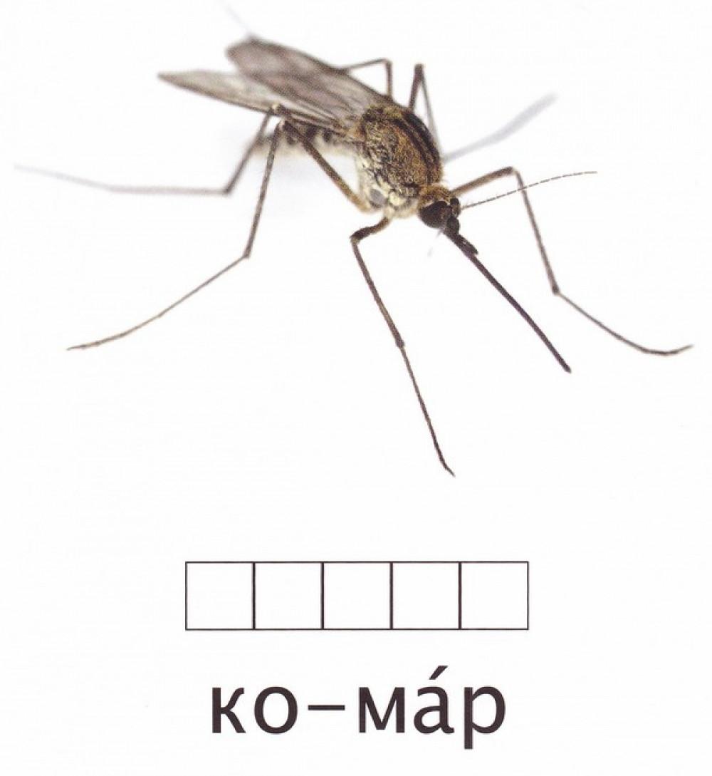 Карточки по методике Домана «Комахи», СВЕНА