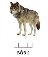 Карточки по методике Домана «Тварини дикі», СВЕНА, фото 1