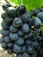 Саженец винограда РУСЛАН