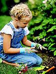 Как хранить садовый инвентарь после сезона?