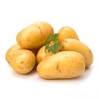 Картопля Альта сорт посадковий ультраранній врожайний перша репродукція Голландія фракция 35 - 45 мм