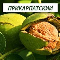 Грецкий орех Прикарпатский, трехлетний