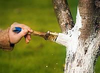 Как защитить садовые деревья в зимний период?