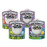 Интерактивная игрушка зверюшка в яйце Hatchimals Who Will You Hatch, Яйцо Хэтчималс дракоша или пингвин, фото 3