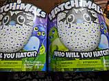 Интерактивная игрушка зверюшка в яйце Hatchimals Who Will You Hatch, Яйцо Хэтчималс дракоша или пингвин, фото 4