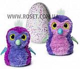 Интерактивная игрушка зверюшка в яйце Hatchimals Who Will You Hatch, Яйцо Хэтчималс дракоша или пингвин, фото 10
