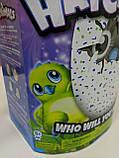 Интерактивная игрушка зверюшка в яйце Hatchimals Who Will You Hatch, Яйцо Хэтчималс дракоша или пингвин, фото 6