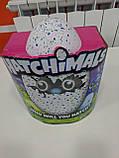 Интерактивная игрушка зверюшка в яйце Hatchimals Who Will You Hatch, Яйцо Хэтчималс дракоша или пингвин, фото 9