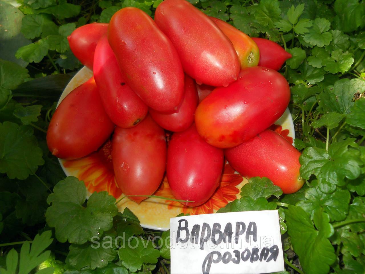 Томат Варвара
