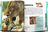 Чиї це дітки? Енциклопедія тварин для дітей, фото 4