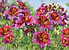 Фотообои *Престиж* № 56 Луговые цветы  (196х272)