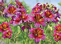 Фотообои *Престиж* № 56 Луговые цветы  (196х272), фото 1