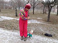 Дрессировка собак декоративных пород в Киев!!!