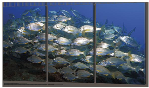 Модульная картина Косяк морских рыб
