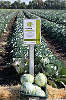 Семена капусты Агрессор F1, 2500 семян, фото 1
