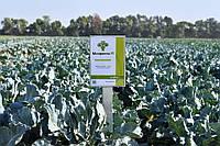 Семена брокколи Монрелло F1, 2500 семян, фото 1