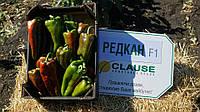 Семена перца РЕДКАН F1, 1000 семян New!, фото 1