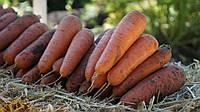 Семена моркови Боливар F1 ( 1,6 - 2,0 ), 100.000 семян, фото 1