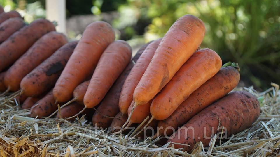 Семена моркови Боливар F1 ( 1,6 - 2,0 ), 500.000 семян