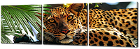 Модульная картина Отдыхающий леопард