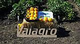 Семена перца Соланор F1, 1000 семян, фото 2
