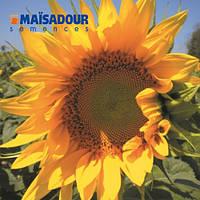 Насіння соняшника Mas 87.A  ( Maisadour semences)