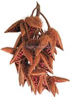 Натуральный краситель Оранжевый Аннато