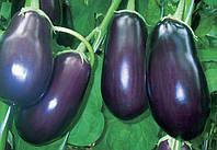 Баклажаны в теплице – пошаговая инструкция получения достойного урожая