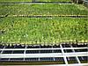 ІЧ плівка Heat Plus Stripe HP-SPN-306-072, (теплый пол ИЧ пленка), фото 8