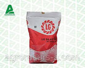 Семена подсолнечника ЛГ5665 М / LG5665 M, Лимагрейн