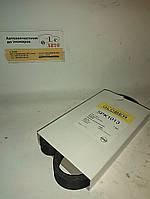 Ремінь рівчаковий  GLOBER 5PK1013