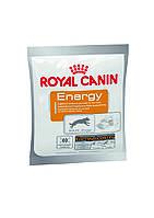 Подкормка Royal Canin Energy дополнительная энергия для активных собак 50 г