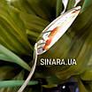 Серебряная ложка с эмалью Змея - Чайная серебряная ложка - Чайная ложка серебро, фото 9