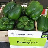 Семена перца сладкого Банкерс F1 (500 сем.) Enza Zaden, фото 2