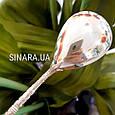 Серебряная ложечка для сахара - Серебряная ложка чайная, фото 6