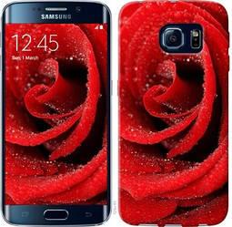 "Чехол на Samsung Galaxy S6 Edge G925F Красная роза ""529c-83-328"""