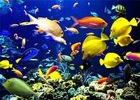 Оформление пресноводного аквариума.