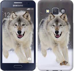 "Чехол на Samsung Galaxy A3 A300H Бегущий волк ""826c-72-328"""