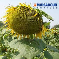 Насіння соняшнику Mas 90.F (Maisadour Semences)