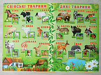 """Плакат """"Домашние и дикие животные"""""""