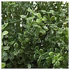 Искусственное растение в горшке IKEA FEJKA 9 см 903.953.37, фото 2
