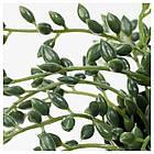 Искусственное растение в горшке IKEA FEJKA 9 см Sznur korali 303.953.40, фото 2