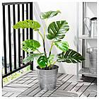 Искусственное растение в горшке IKEA FEJKA 19 см Monstera 403.952.88, фото 2