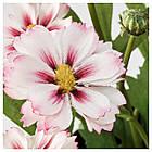 Искусственное растение в горшке IKEA FEJKA 9 см 3 шт розовые 703.953.19, фото 2