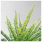 Искусственное растение в горшке IKEA FEJKA 10 см папоротник 003.495.33, фото 3