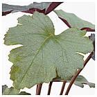 Искусственное растение в горшке IKEA FEJKA 12 см 303.952.98, фото 2