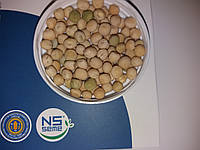 Акція на Горох НС МОРОЗ Високоврожайний 4,2-6,0 т/га. Ультраранній. 1 Репродукція. Мішок: 25 кг. Протравлені Максим 035.