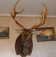 Голова (чучело) оленя на стену